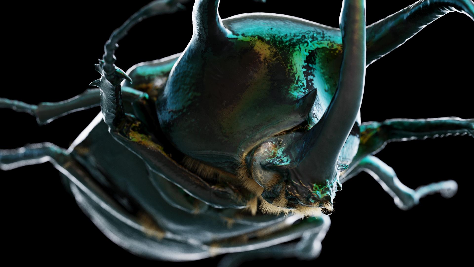 Beetle_closeup
